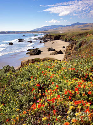 California Coast Wildflowers Vertical Format Print by Dan Carmichael
