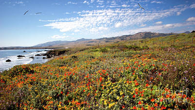 California Coast Wildflowers With Birds Print by Dan Carmichael