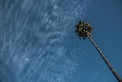 California Dreamin' Print by Richard White