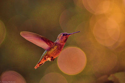Photograph - California Hummingbird by Tommy Anderson