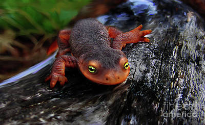Newts Mixed Media - California Newt by Lisa Redfern