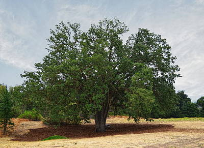 California Oak Tree At Paramount Ranch Print by Glenn McCarthy Art and Photography