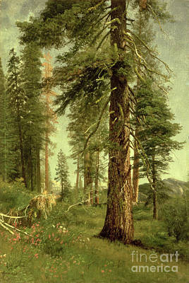 Romanticist Painting - California Redwoods by Albert Bierstadt