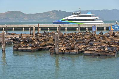California Sealions In San Francisco Bay. Original by Gino Rigucci