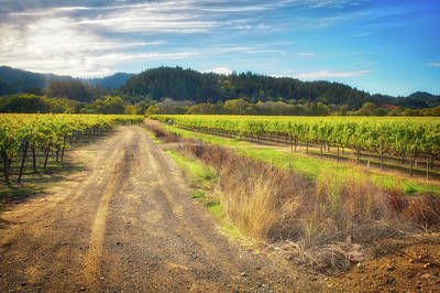 Dry Creek Photograph - California Wine County Road- Sonoma by Jennifer Rondinelli Reilly