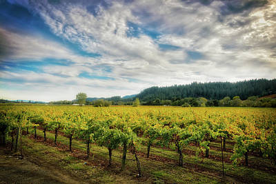 Dry Creek Photograph - California Wine County - Sonoma #2 by Jennifer Rondinelli Reilly