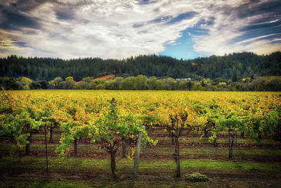 Dry Creek Photograph - California Wine County - Sonoma by Jennifer Rondinelli Reilly