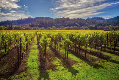 Dry Creek Photograph - California Wine County - Sonoma Vineyard #6 by Jennifer Rondinelli Reilly