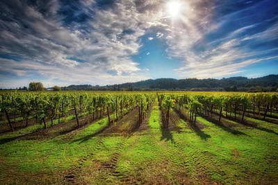 Dry Creek Photograph - California Wine County - Sonoma Vineyard #8 by Jennifer Rondinelli Reilly