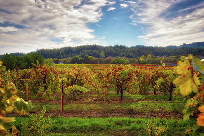 Dry Creek Photograph - California Wine County - Sonoma Vineyard by Jennifer Rondinelli Reilly