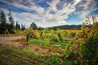 Dry Creek Photograph - California Wine County - Sonoma Vineyards #3 by Jennifer Rondinelli Reilly