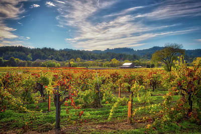 Dry Creek Photograph - California Wine County - Sonoma Vineyards #4 by Jennifer Rondinelli Reilly