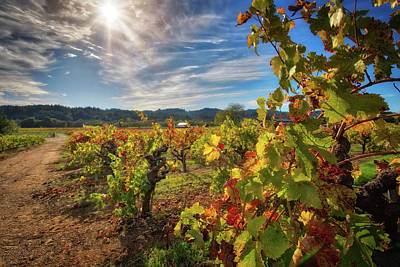 Dry Creek Photograph - California Wine County - Sonoma Vineyards #5 by Jennifer Rondinelli Reilly