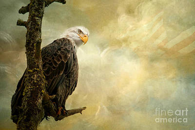 Eagle Photograph - Call Of Honor by Beve Brown-Clark Photography