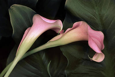 Embrace Photograph - Calla Caress  by Jessica Jenney