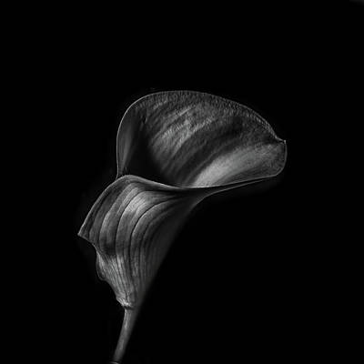 Outdoor Still Life Photograph - Calla Lilly Bw by Paul Freidlund
