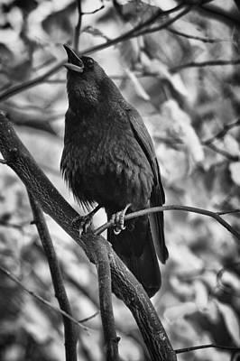 Crow Photograph - Calling by Owen Calvert