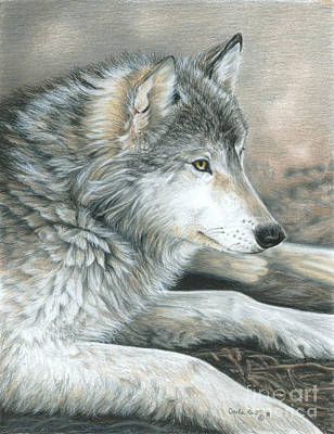 Wolves Drawing - Calm Wolf by Carla Kurt