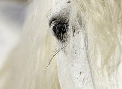 Camargue Stallion's Eye Print by Carol Walker