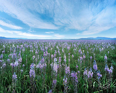Spring Photograph - Camas Blue by Leland D Howard