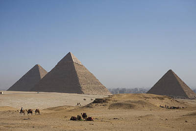 Camels At The Great Pyramids At Giza Print by Taylor S. Kennedy