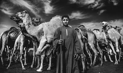 Camels Gaurdian Print by Mohamed Safwat Abonour
