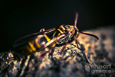 Camouflaged Killer Wasp Print by Jorgo Photography - Wall Art Gallery
