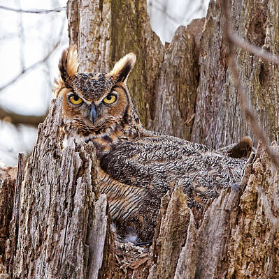 Camouflaged Owl Original by Donna Caplinger