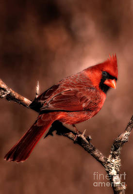 Red Bird Photograph - Can I Help You by Todd Bielby
