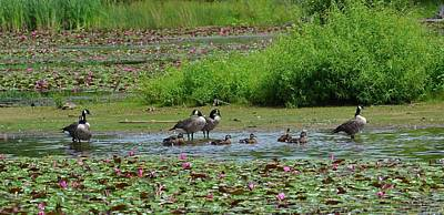 Canada Goose And Family  Print by Michael Mrozik