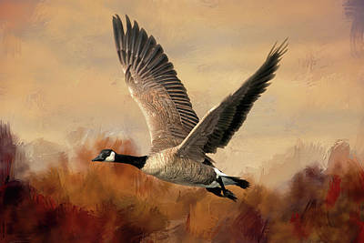 Goose Photograph - Canadian Air by Donna Kennedy