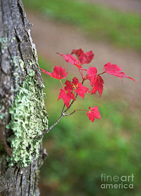 Photograph - Canadian Fall... by Nina Stavlund
