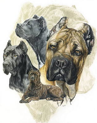 Purebred Drawing - Cane Corso W/ghost by Barbara Keith