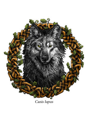 Oak Leaf Drawing - Canis Lupus - Gray Wolf With Oak Celtic Border by Callan Rogers-Grazado