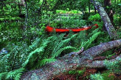 Canoe Among The Ferns Print by David Patterson