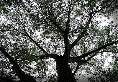 Canopy Of Life Print by Steven Milner