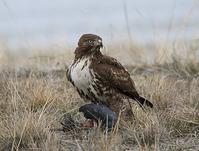 Hawk Photograph - Can't You See I'm Eating by Loree Johnson