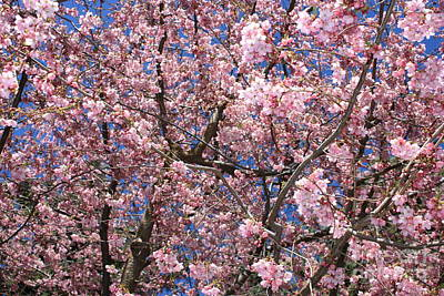 Canvas Of Pink Blossoms Print by Carol Groenen