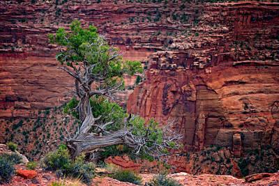 Canyonlands Juniper Print by Rick Berk