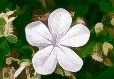 Natural Painting - Cape Leadwort Flower by Lanjee Chee