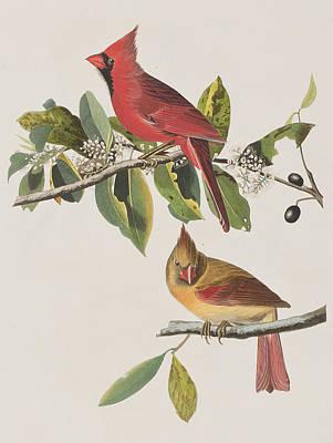 Twig Drawing - Cardinal Grosbeak by John James Audubon
