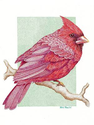 Cardinal Print by Jack Puglisi