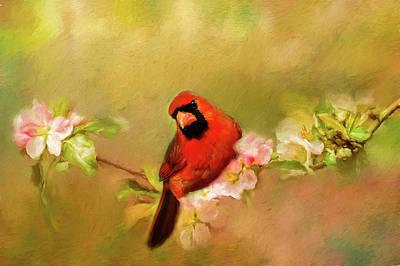 Cardinals. Wildlife. Nature Photograph - Cardinal Of Spring by Darren Fisher