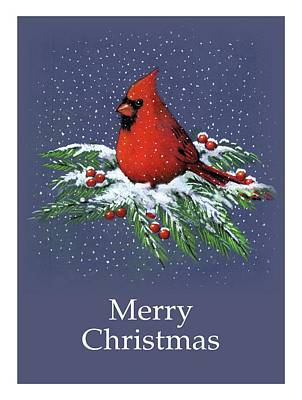 Drawing - Cardinal On Snowy Pine Branches, Merry Christmas by Joyce Geleynse