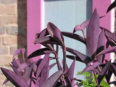 Caribbean Flowers Print featuring the photograph Caribbean Purple by Kurt Gustafson