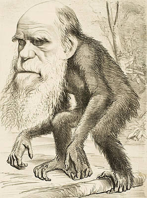 Ape Drawing - Caricature Of Charles Darwin by English School