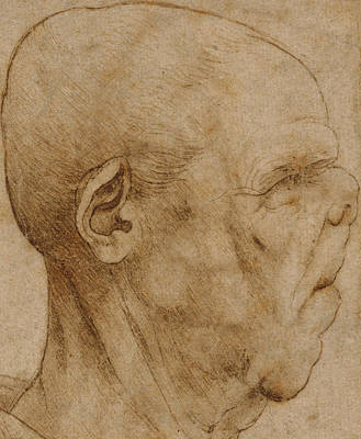Pen And Ink Drawing Drawing - Caricature Of The Head Of An Old Man, In Profile To The Right by Leonardo Da Vinci