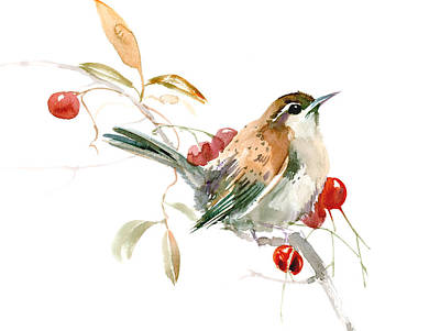 Sahara Drawing - Carolina Warbler by Suren Nersisyan