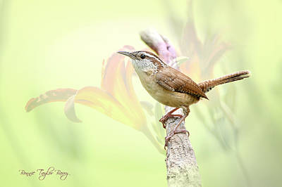 Carolina Wren In Early Spring Print by Bonnie Barry