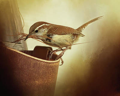 Carolina Wren Digital Art - Carolina Wren Nesting by TnBackroadsPhotos